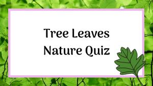 tree leaves nature quiz