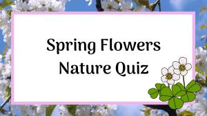 spring flowers nature quiz