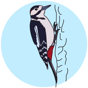 woodpecker, birds field guides