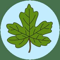 field maple leaf