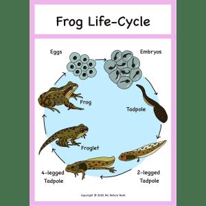 frog life-cycle poster