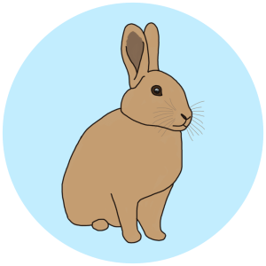 rabbit, wildlife field guides