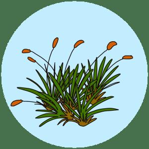 silky forklet moss
