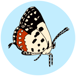 red pierrot, butterflies of bangalore