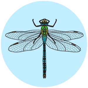 Emperor dragonfly, insect field guides
