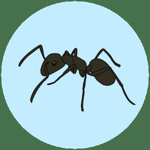 garden ant