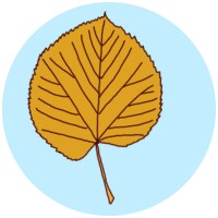 how to identify autumn leaves