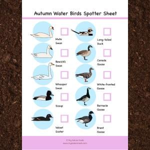 autumn water birds
