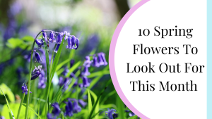 10 spring flowers