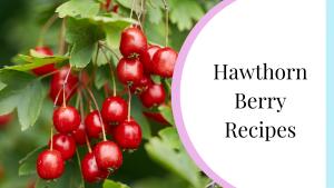 hawthorn berry recipes