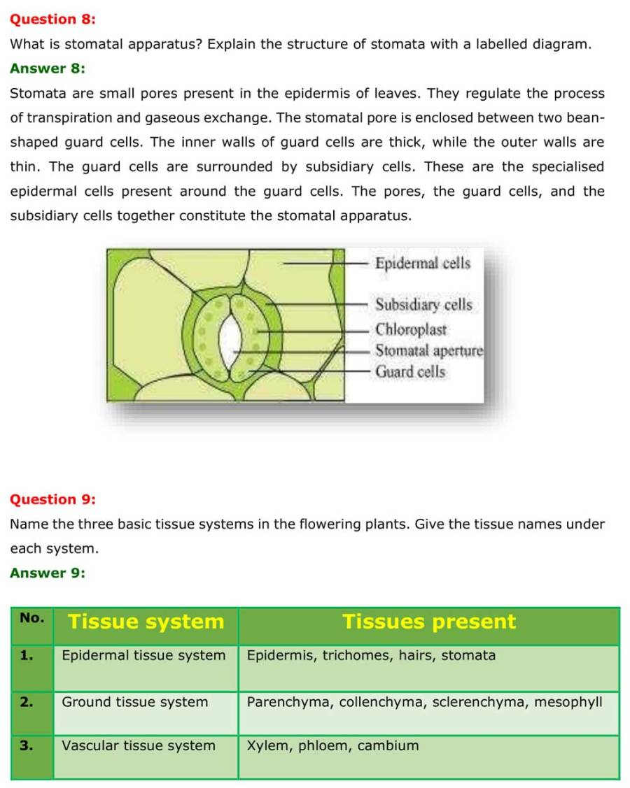 NCERT Solutions For Class 11 Biology Chapter 6 - Free PDFs