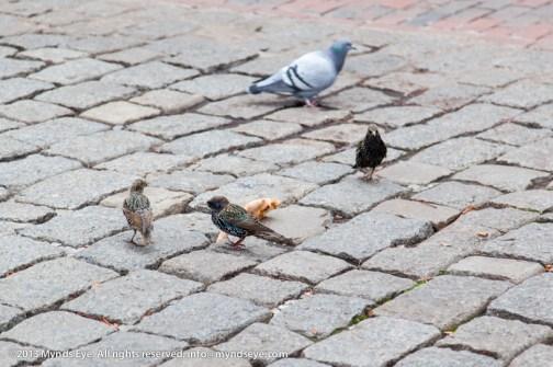 Fat birds