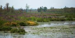 Creeksideweb