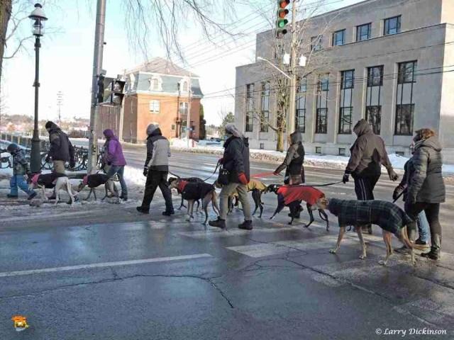 greyhounds01