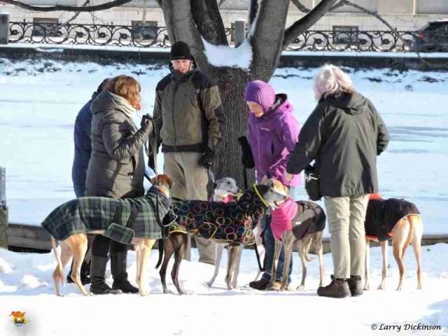 greyhounds02