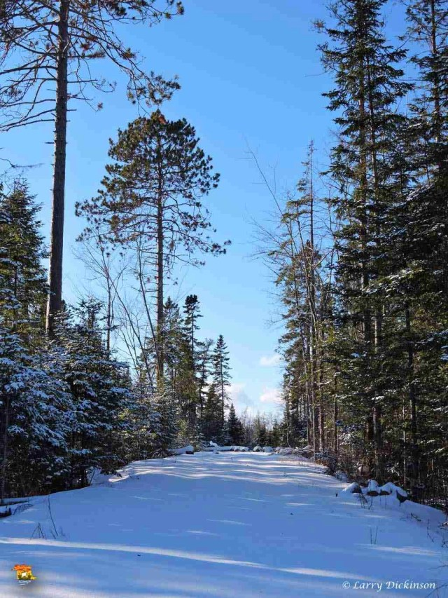 winter walk 018