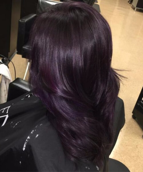Black Mane with a Dazzling Hint of Dark Purple plum hair color