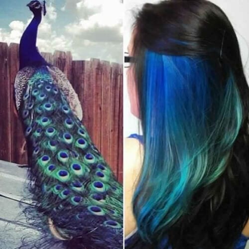 peacock peekaboo highlights