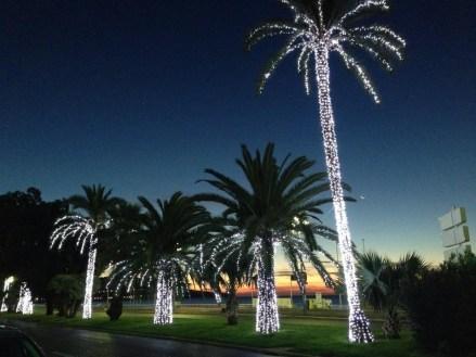 Nice Palmiers en fête pour Noël Promenade des Anglais