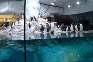 Marinland Antarctica Penguin