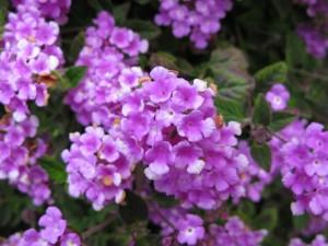 garden-flower