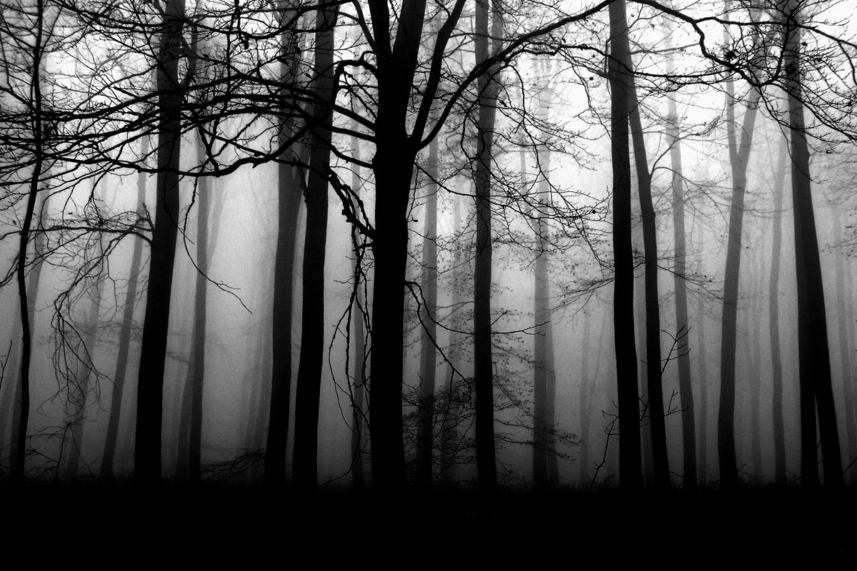 Dark Forest  Interactive RPG Ambience Player
