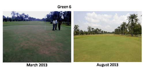 Not just these 3 greens; all greens in this client club show improvement.