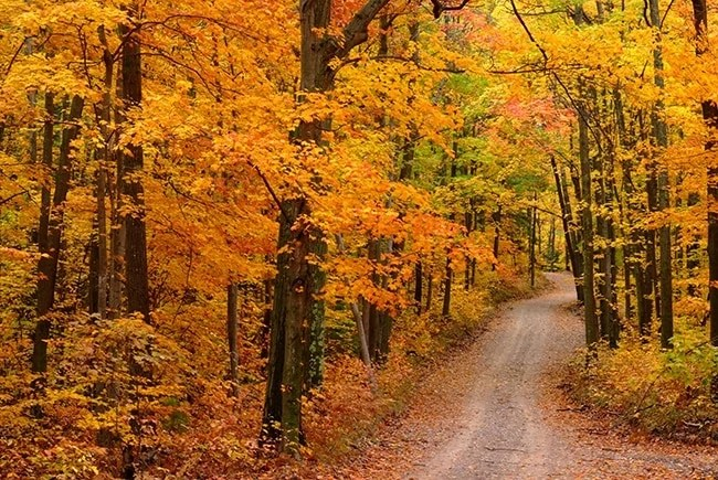 Fall Wallpaper Screensavers Tunnel Of Autumn Trees At Sleeping Bear Dunes Mynorth Com