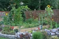 Beauty in the Vegetable Garden