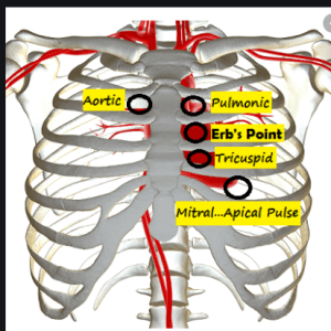 respiratory and cardiovascular assessment