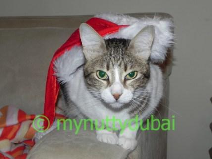 ....Christmas!!