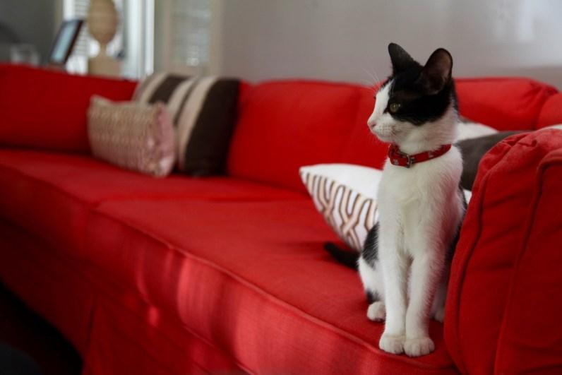INDIA HICKS - CAT