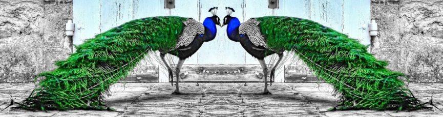 cropped-2peas3.jpg
