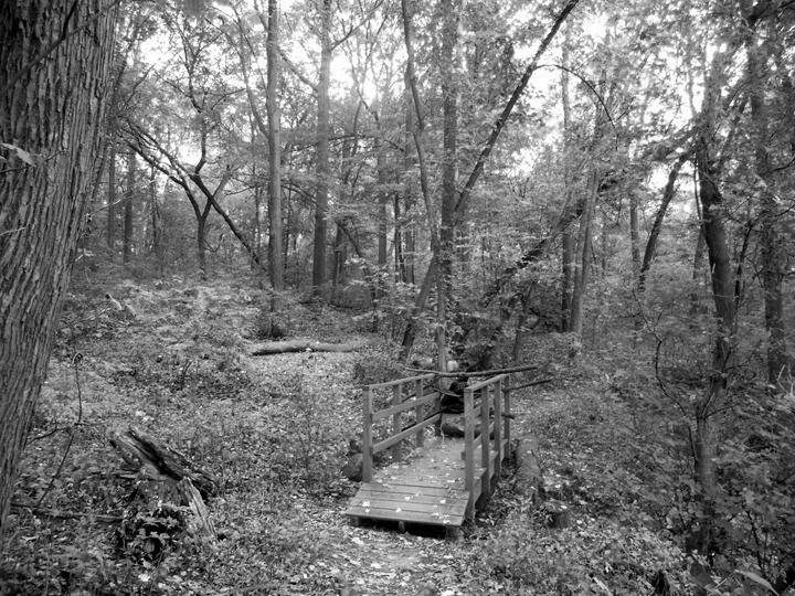 Through the Tomlinson Woods