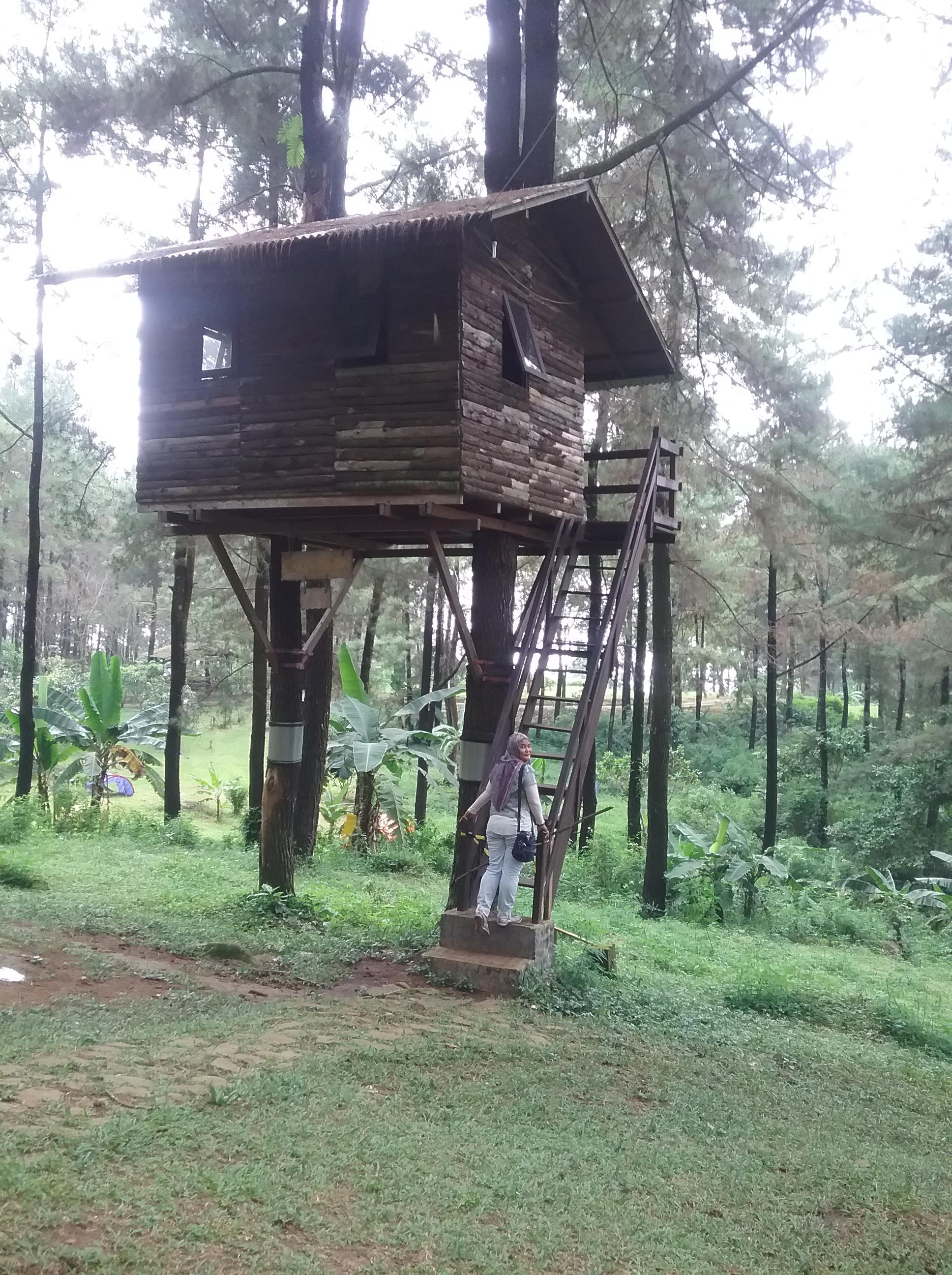 Rumah Pohon Taman Dayu : rumah, pohon, taman, Menikmati, Rumah, Pohon, Ongakudewi
