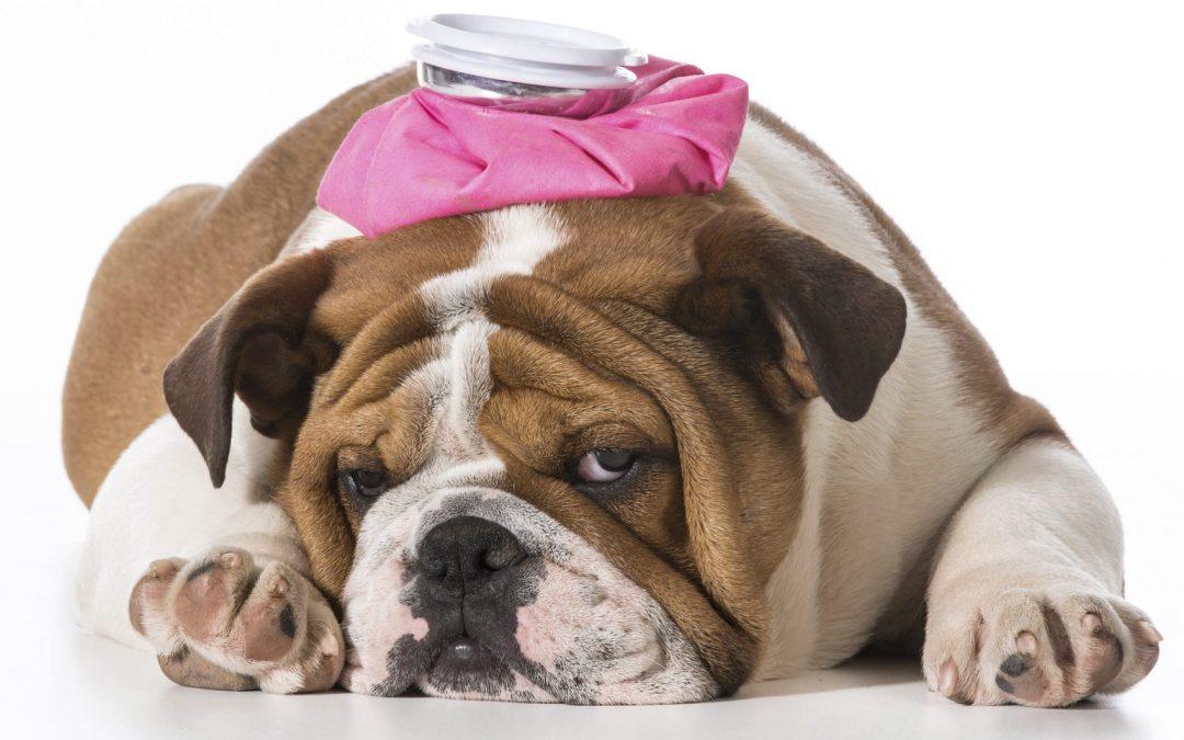 Ear piercing cures migraine?!