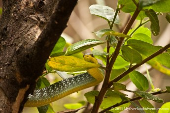 Camouflaged Green Snake