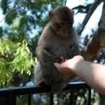 Monkey opening Martin's hand 2