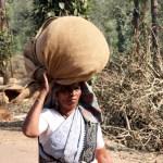 Carrying Tea