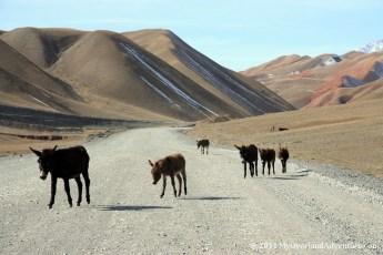 Road to Sary Tash