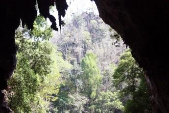 Tham Lot Cave bats