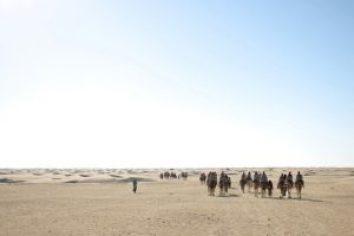 group, tourist, camel