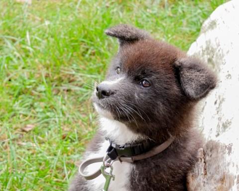 j-adopte-un-chien-2
