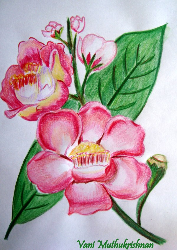 Shading Flowers with Colored Pencils