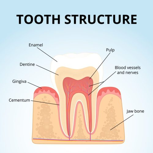 small resolution of blog 1 how to restore tooth enamel