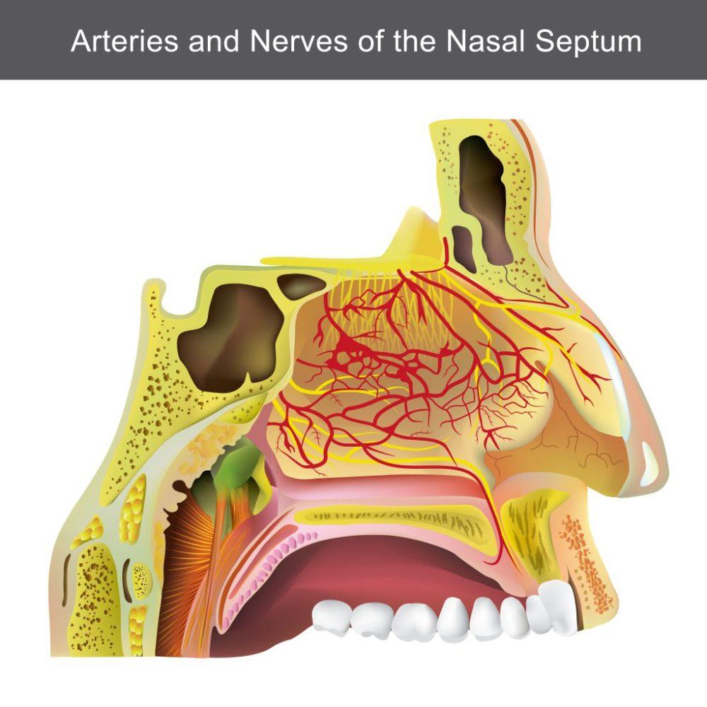 medium resolution of creative blog 2 sinus tooth pain