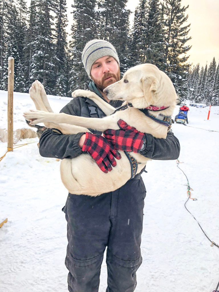 Kingmik Dog Sledding in Banff, Canada
