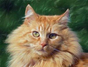 Face of golden cat
