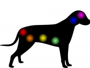 chakras in a dog