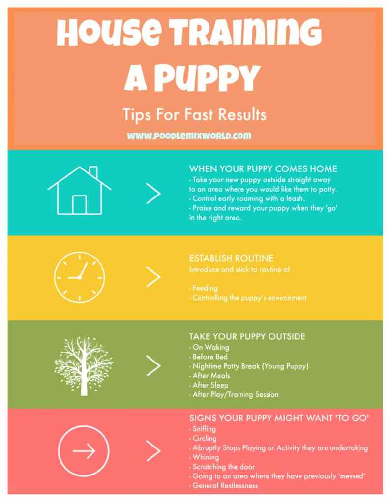 Image of all the important steps on how to potty train a puppy effectively